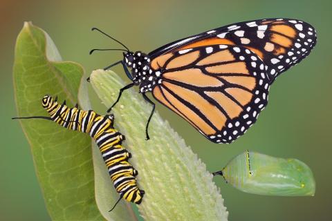 Нельзя приклеить к гусенице крылья и заставить ее летать,как бабочку.
