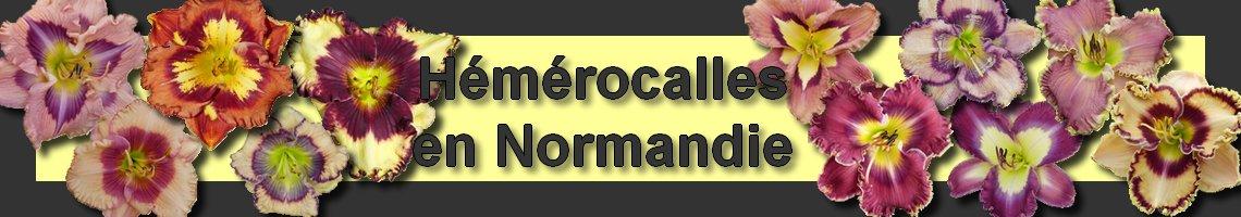 Hémérocalles en Normandie