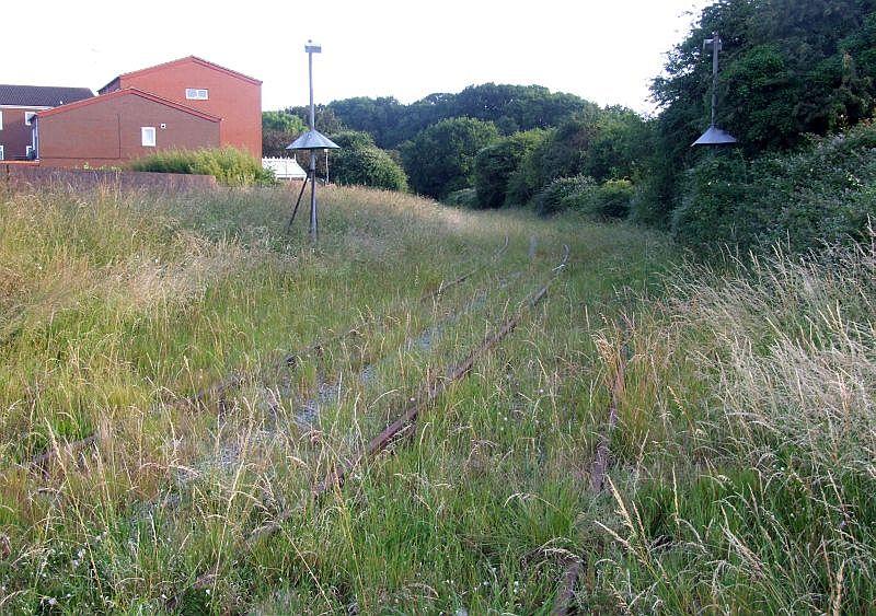 Overgrown Holbrook Loop