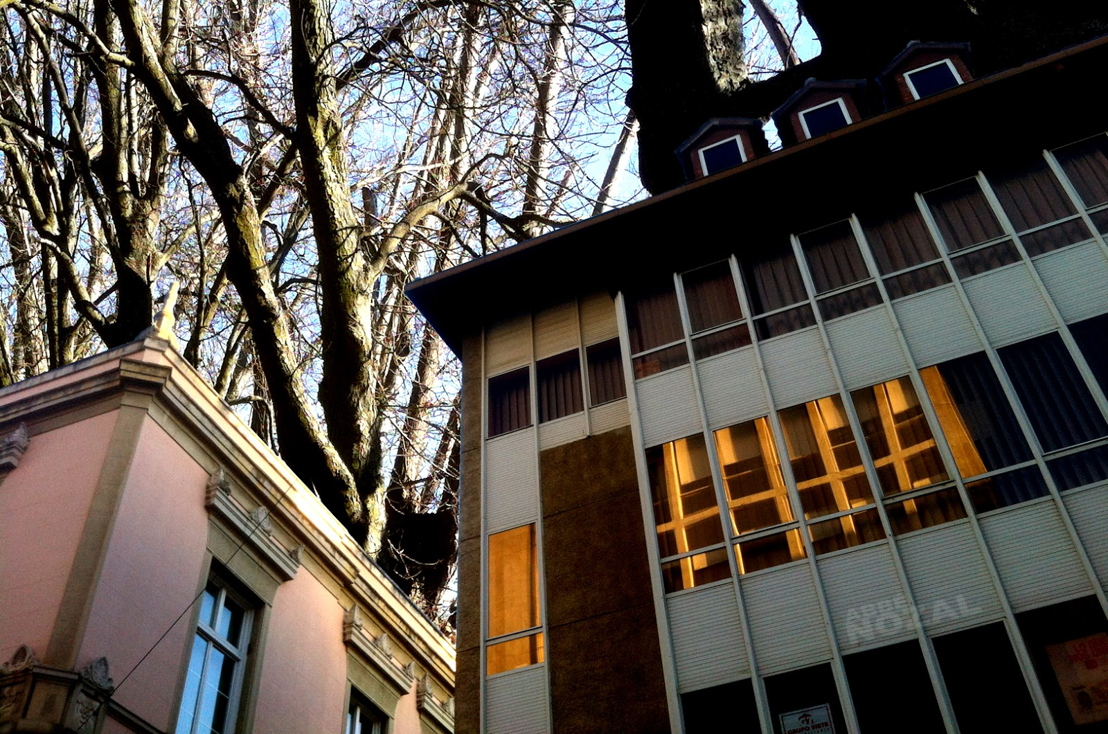 Los árboles del Ayuntamiento, 2015 Abbé Nozal