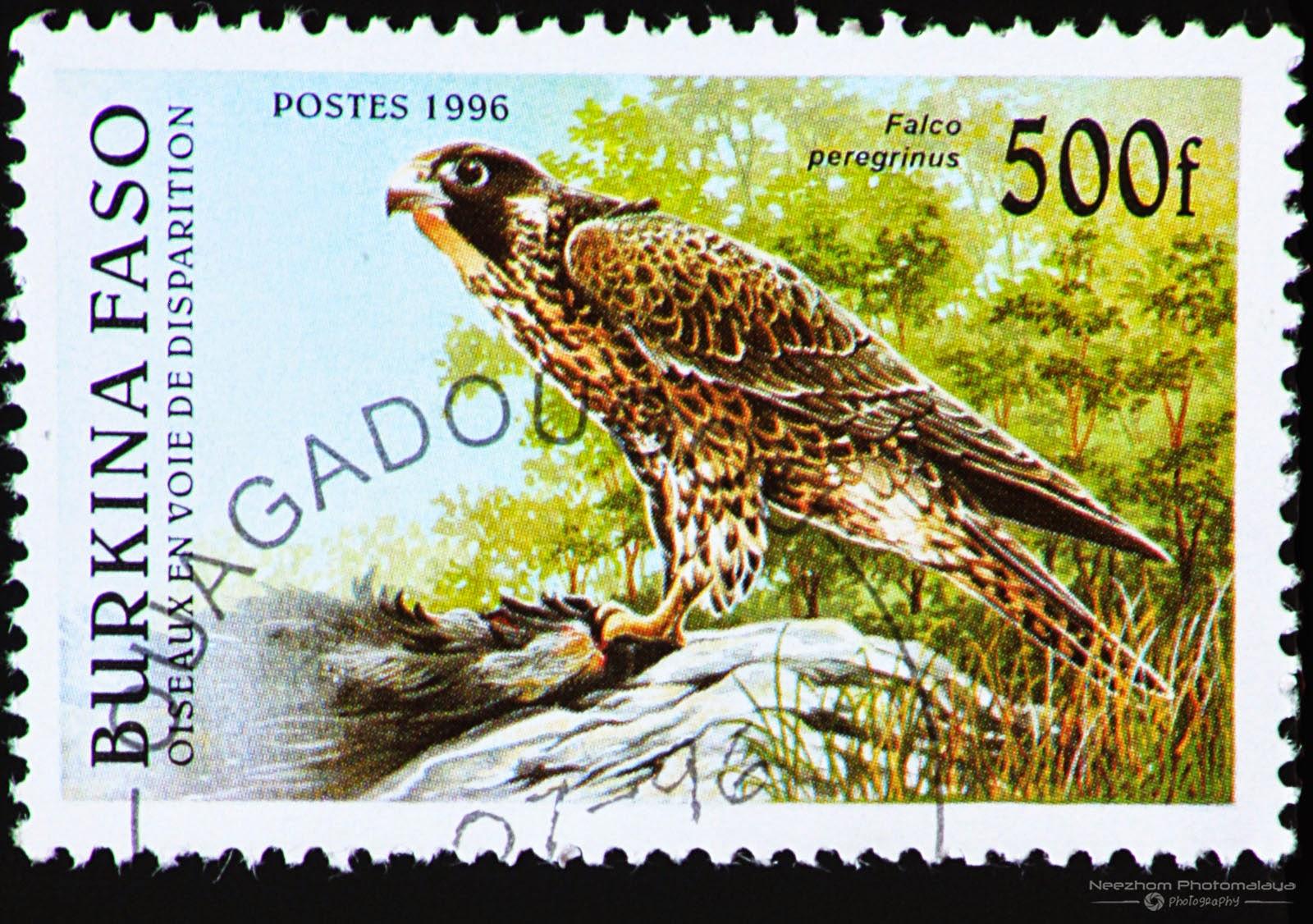 Burkina Faso 1996 Endangered Birds stamp - Peregrine falcon (Falco peregrinus) 500 f