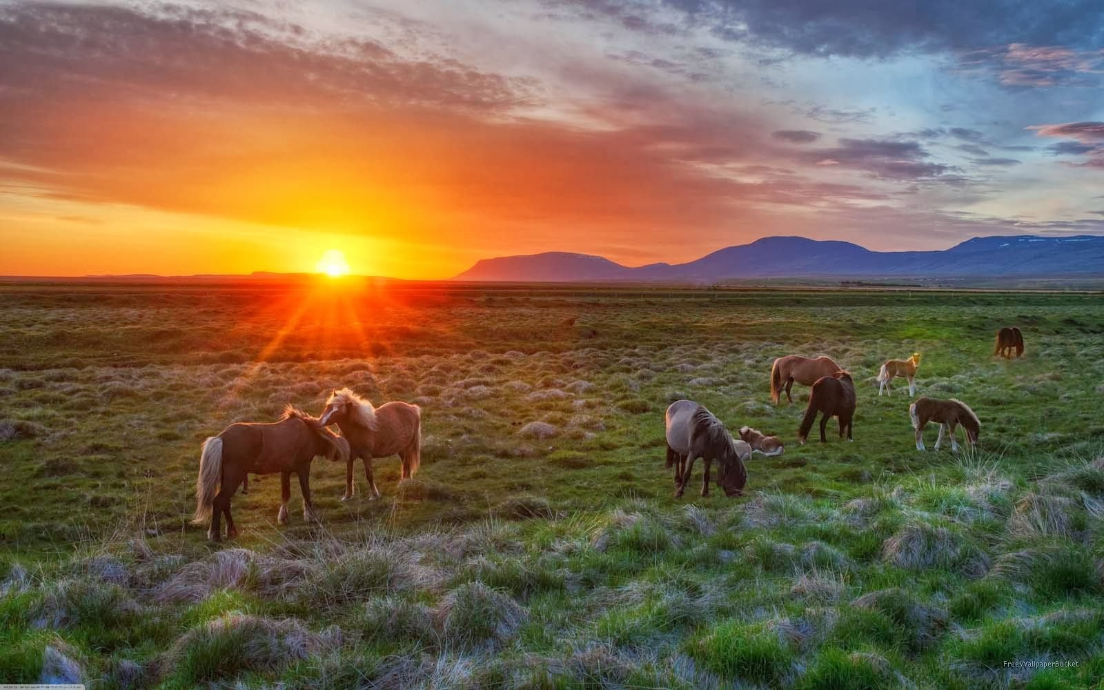 All about animals horse species awesome illustrated - Free horse backgrounds ...