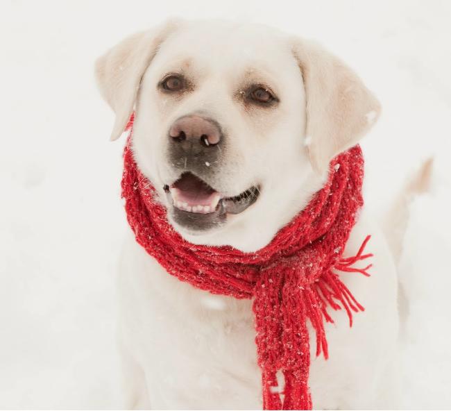 Jak chronić psa przed mrozem