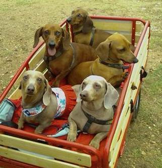 dog wagons east