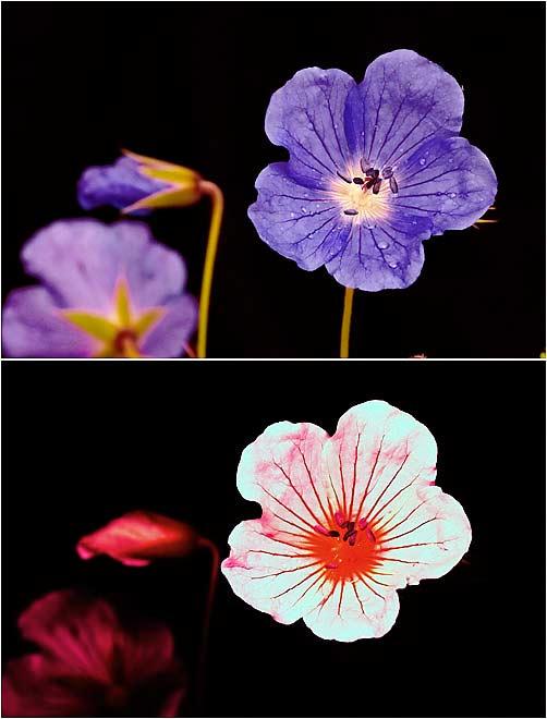 Nrfoto Bjrn Rrslett: Professional Nature Photographer