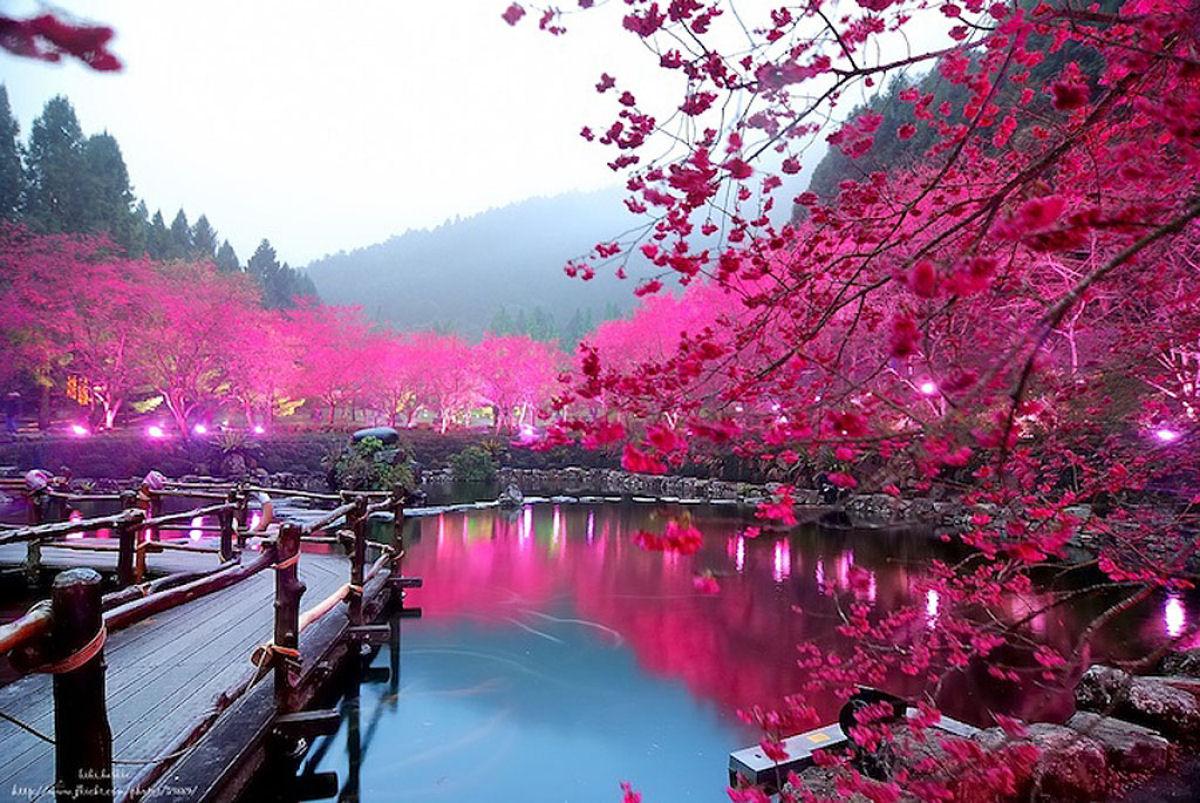 http://2.bp.blogspot.com/-Rb7CX3Yiazs/UNJIZYx_yCI/AAAAAAAAS2I/y-xUX_l-Lv8/s1600/cerejeiras_iluminadas_taiwan_01.jpg