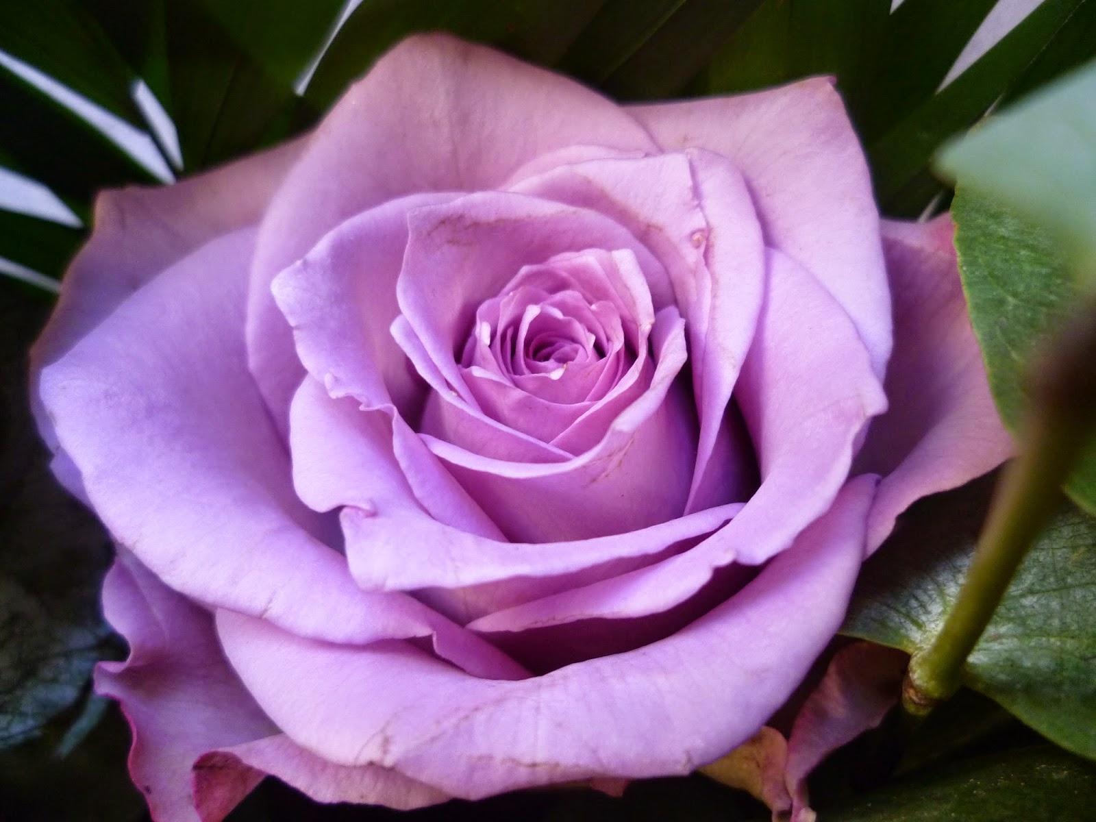 http://2.bp.blogspot.com/-Rb9s-I1D_hA/VQW00vJso-I/AAAAAAAAFD4/1knOBhvUO1s/s1600/P1050901.JPG