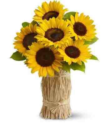 Gambar Terbaru Terbingkai Gambar Bunga Matahari