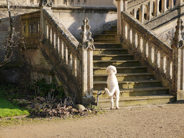Dog waiting at the foot of a stone staircase