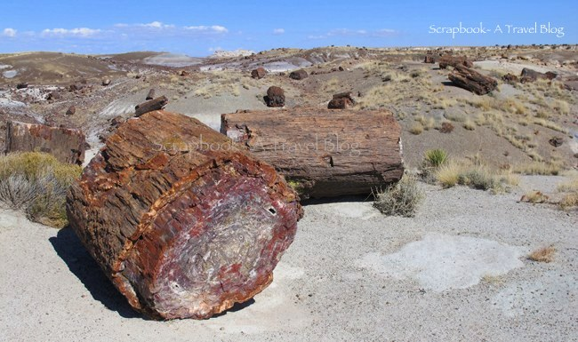 Petrified wood at Petrified Forest National Park Arizona