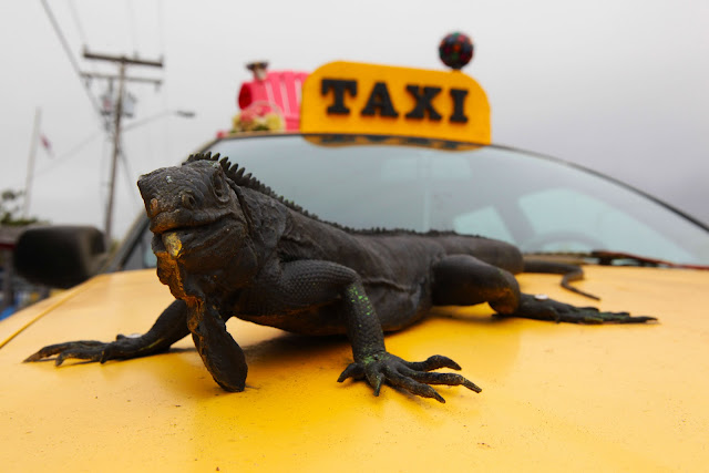 A taxi in Cannon Beach covered in art including a large realistic looking iguana.