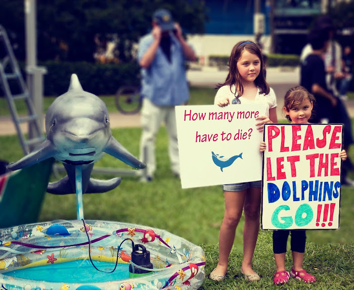 Save Dolphins