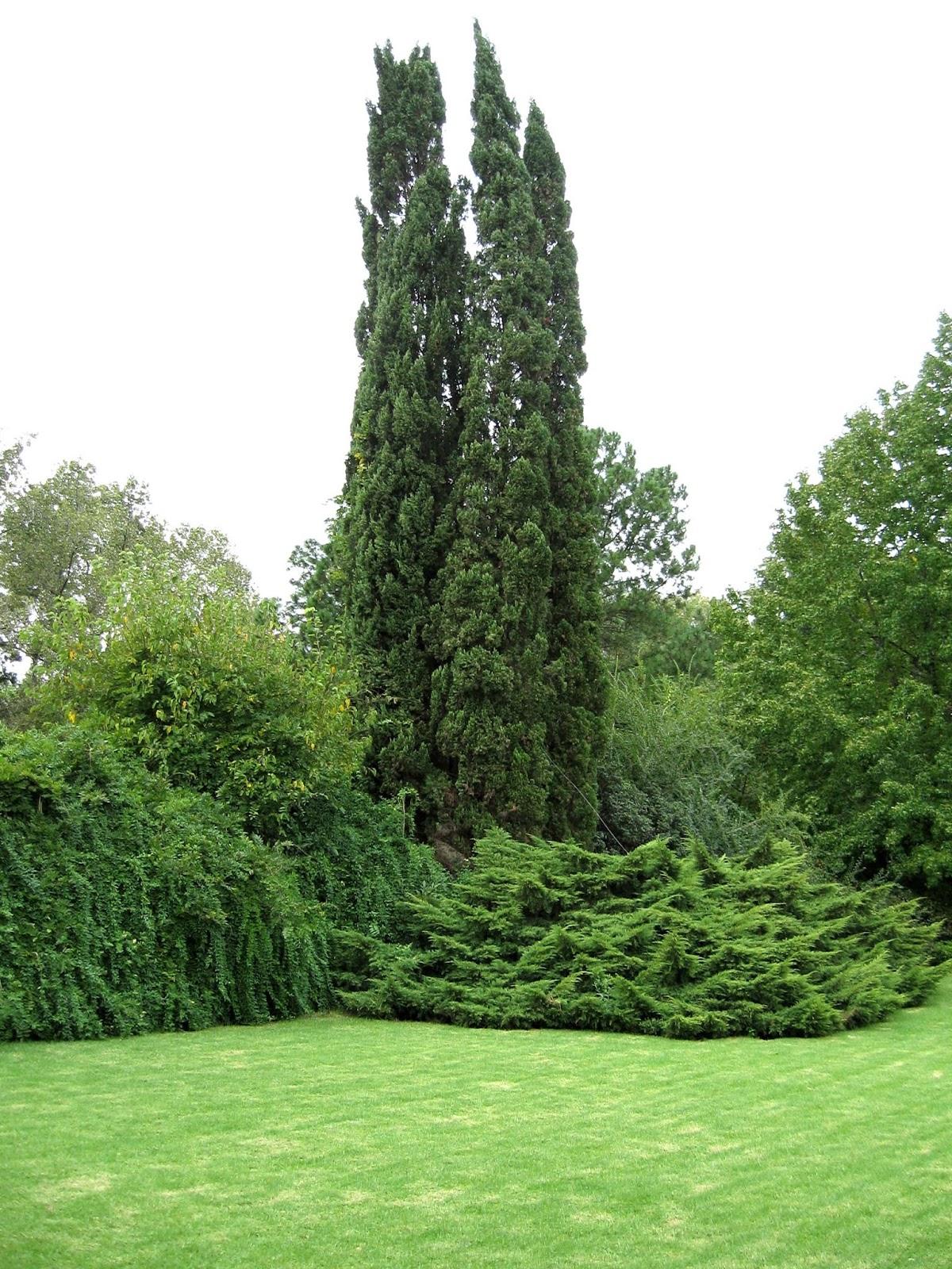 En el jardin con feras perennes for Capillas de velacion jardin de los pinos