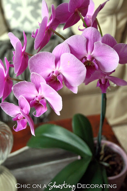 Chic on a Shoestring Decorating blog, purple orchid