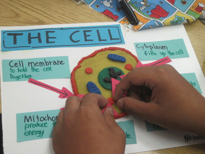 Labeled 3D Animal Cell