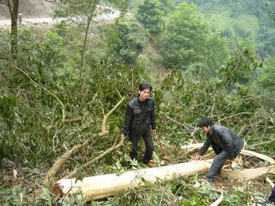 Gia Lai: Khởi tố vụ án phá rừng tại Vườn Quốc gia Kon Ka Kinh