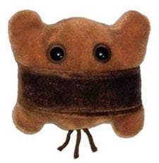 http://www.giantmicrobes.com/us/products/scum.html