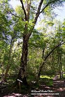 Moncayo AG-2 Itinerario Botánico sendero senderismo ruta abedeul