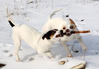 They play hard