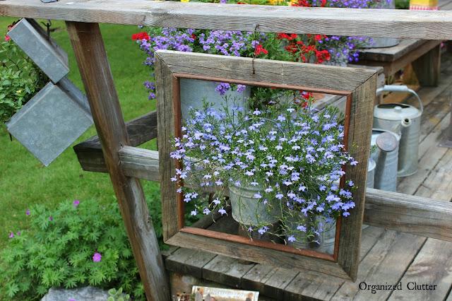 Garden Junk Framed Lobelia www.organizedclutter.net