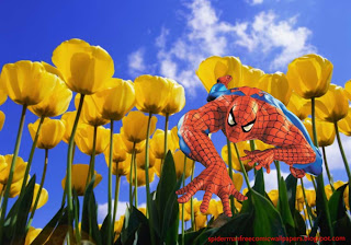Spiderman desktop Wallpaper Spiderman Crawling and Climbing at Tulips Flowers Field Desktop wallpaper