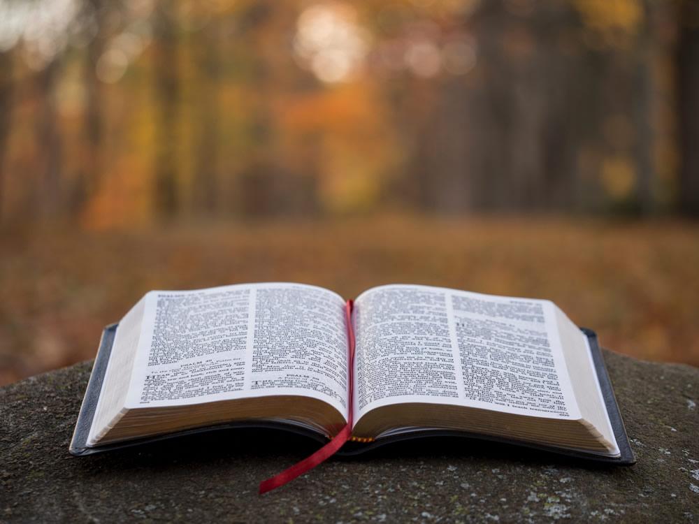 Lectio | Áudios e Textos