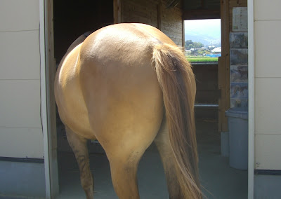 馬 ペット 尻