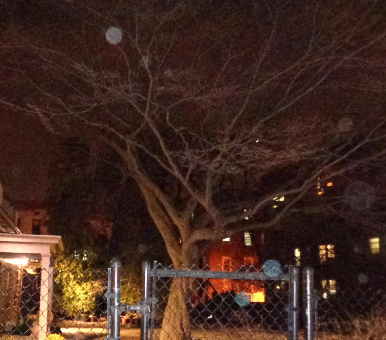 orbs in tree