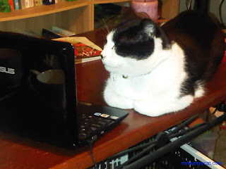 Picture of Mr Bumpy Cat using a computer