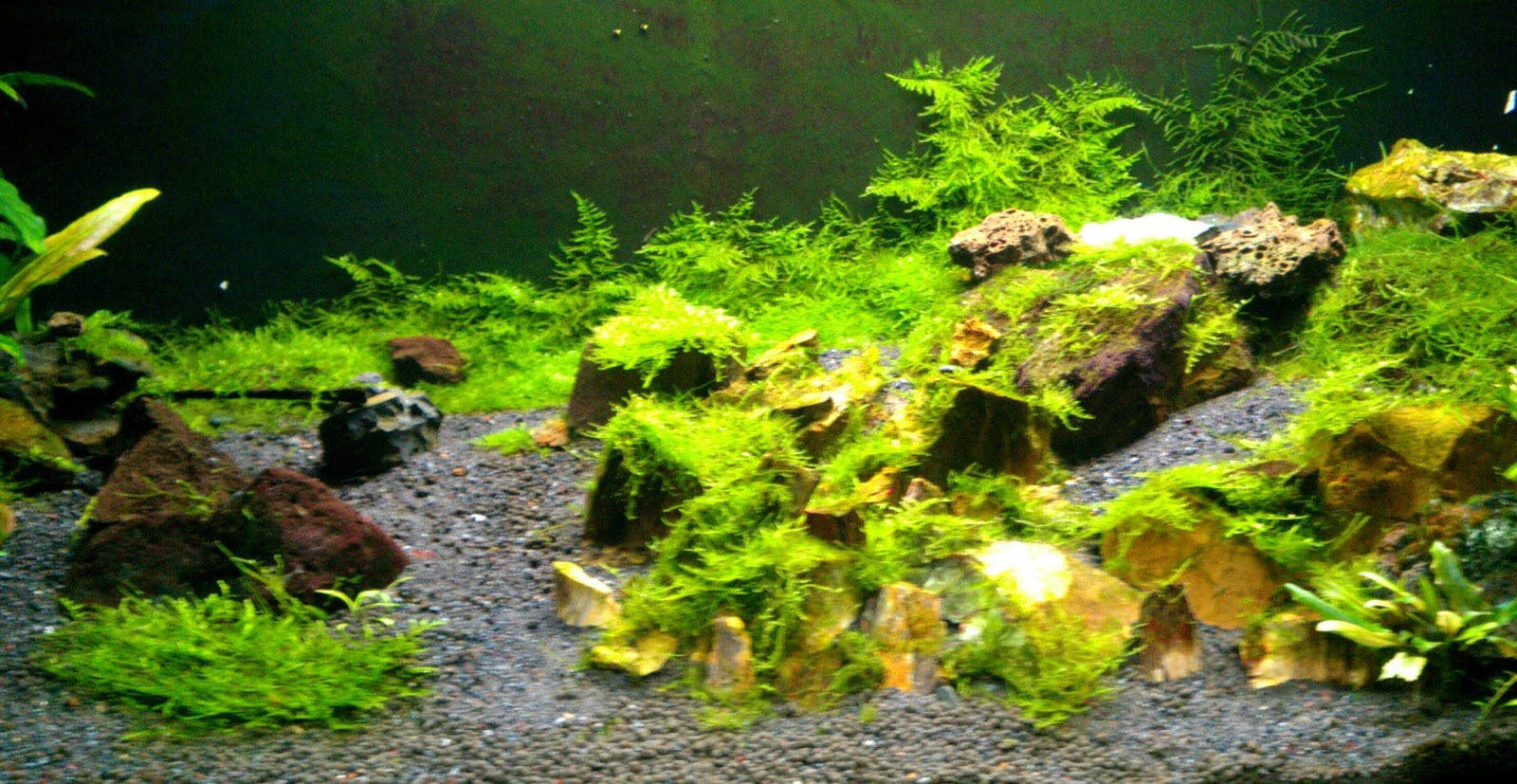 Greenleaf Splindid Aquascape Christmas N Mini Christmas Moss