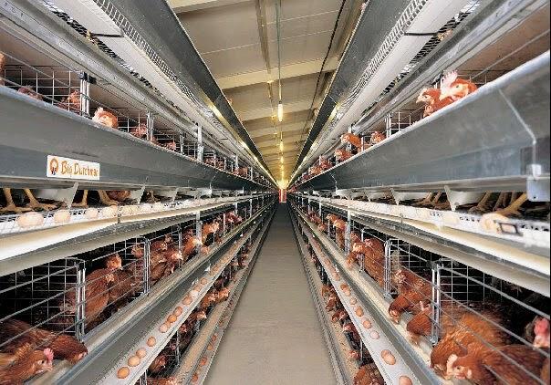 SKRIPSI / TUGAS AKHIR: Sistem Informasi Persediaan Pakan Ayam dan Obat-obatan pada Peternakan Ayam Petelur Berbasis PHP