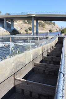 A visit to the Nimbus Fish Hatchery in Rancho Cordova