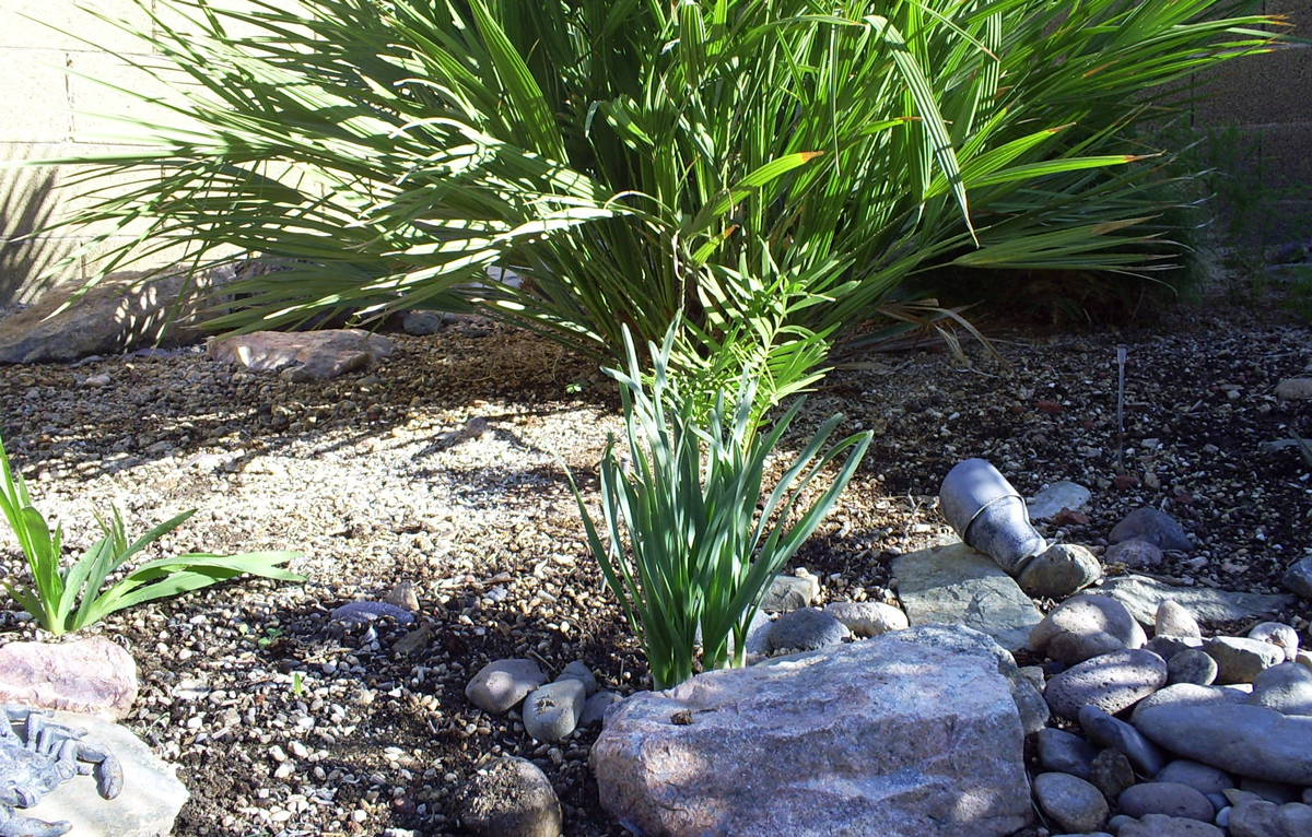 Brad 39 S Tropical Paradise How Often To Water Your Daffodils And Freesia