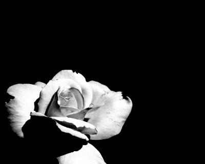 black white flower clipart