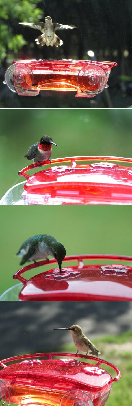 Beautiful Hummingbird Feeder For Window