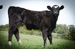 Favorite Cow 2013