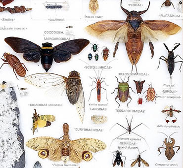 Insects+pictures+with+names+for+kids.jpg