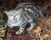 feral cat displaying defensive behavior