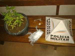 Pés de maconha e cocaína são apreendidos no Centro de Itaúna