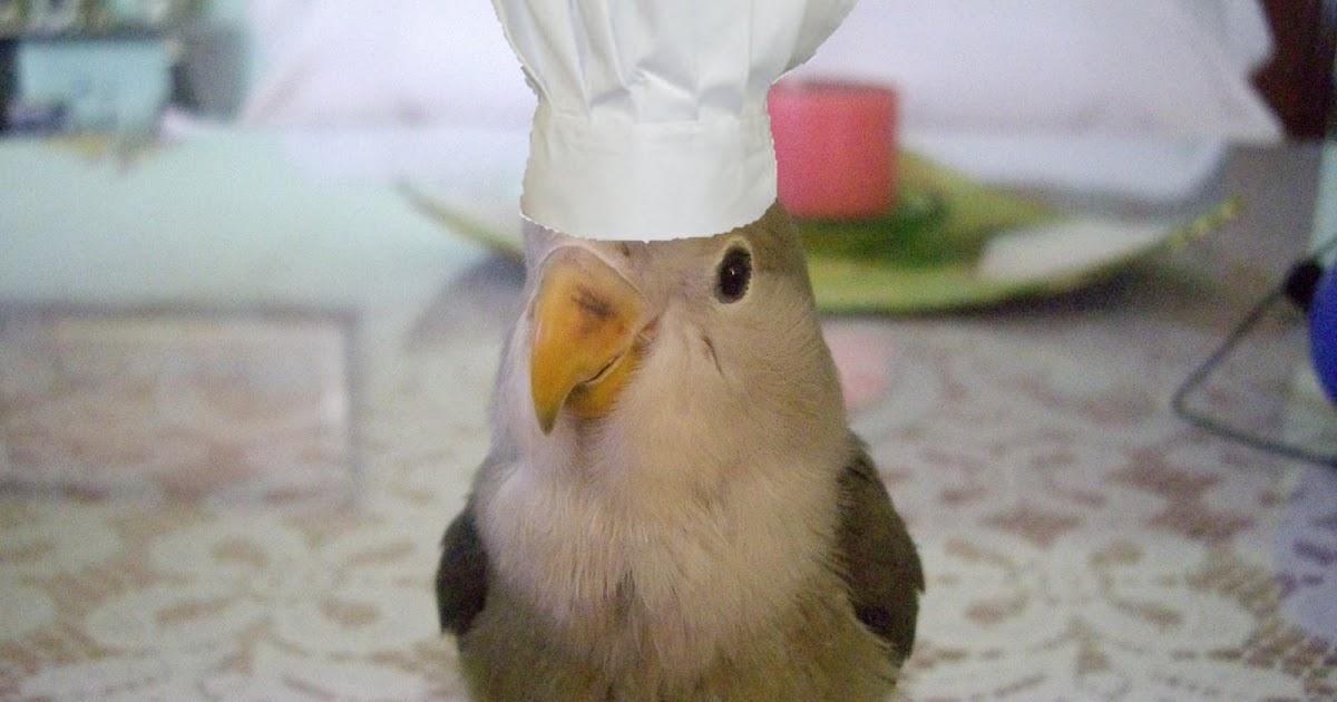Mis pinches for Utillaje cocina