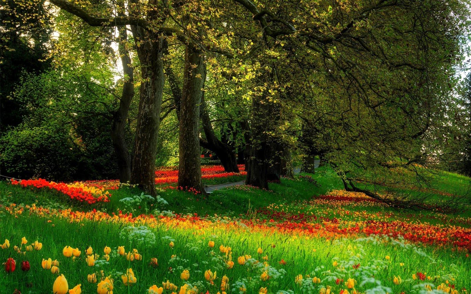 Banco de im genes parque cubierto con flores de colores for Plantas ornamentales para parques