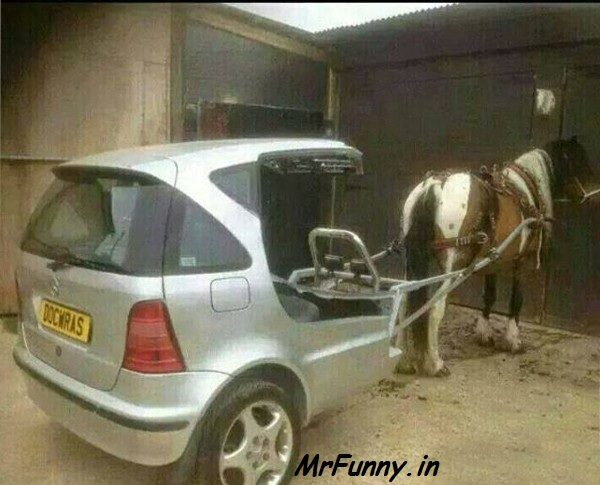 Modern Horse Funny Indian Pic – Indian Funny Pic