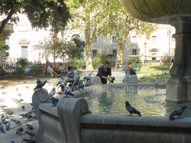 The pigeons do not object to the bath they receive