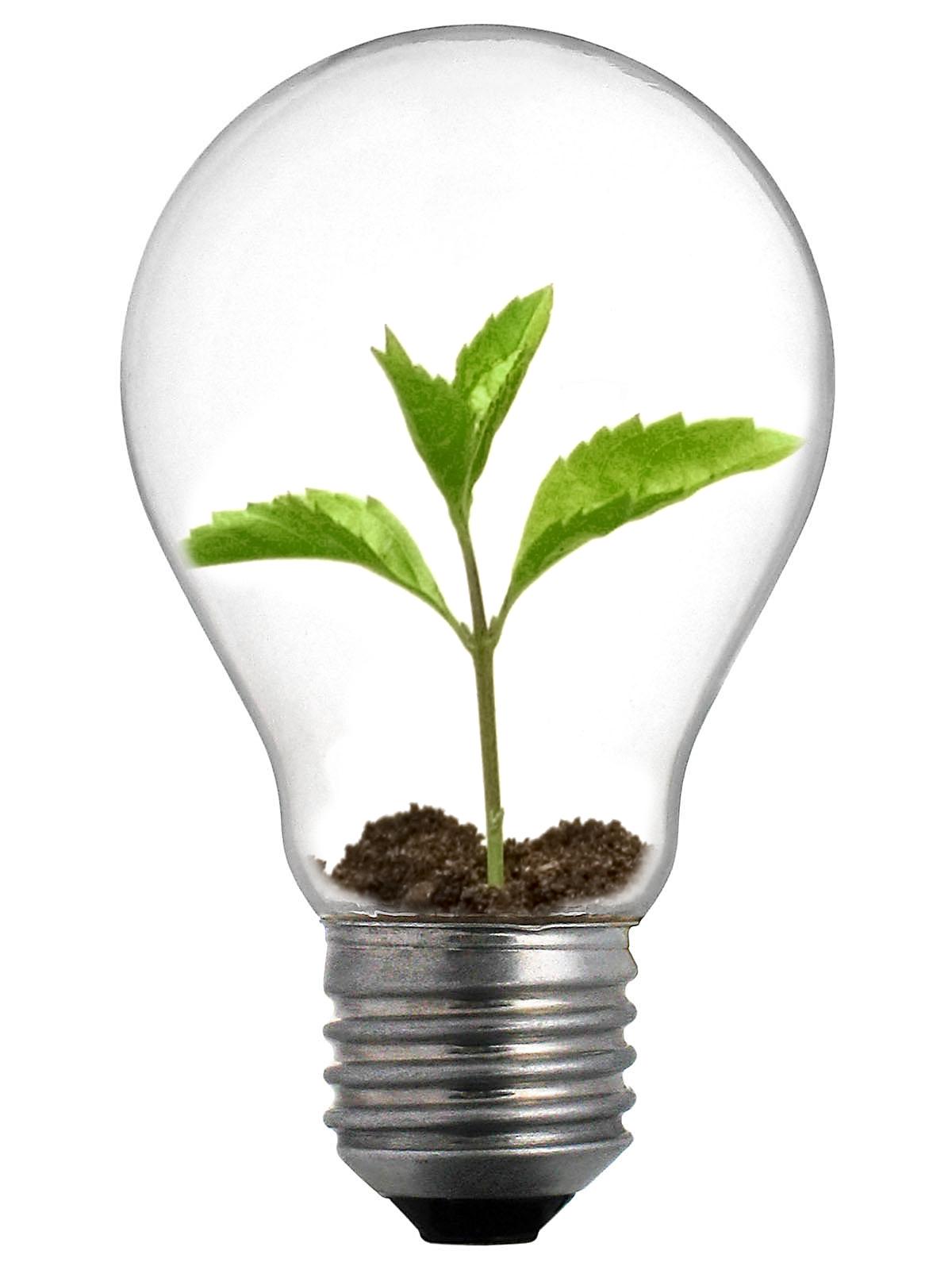 http://2.bp.blogspot.com/-RiPBhUhoT0I/Ta37vCPh-CI/AAAAAAAAAEQ/EpGdy8BIvqA/s1600/Sprout_Lightbulb.jpg
