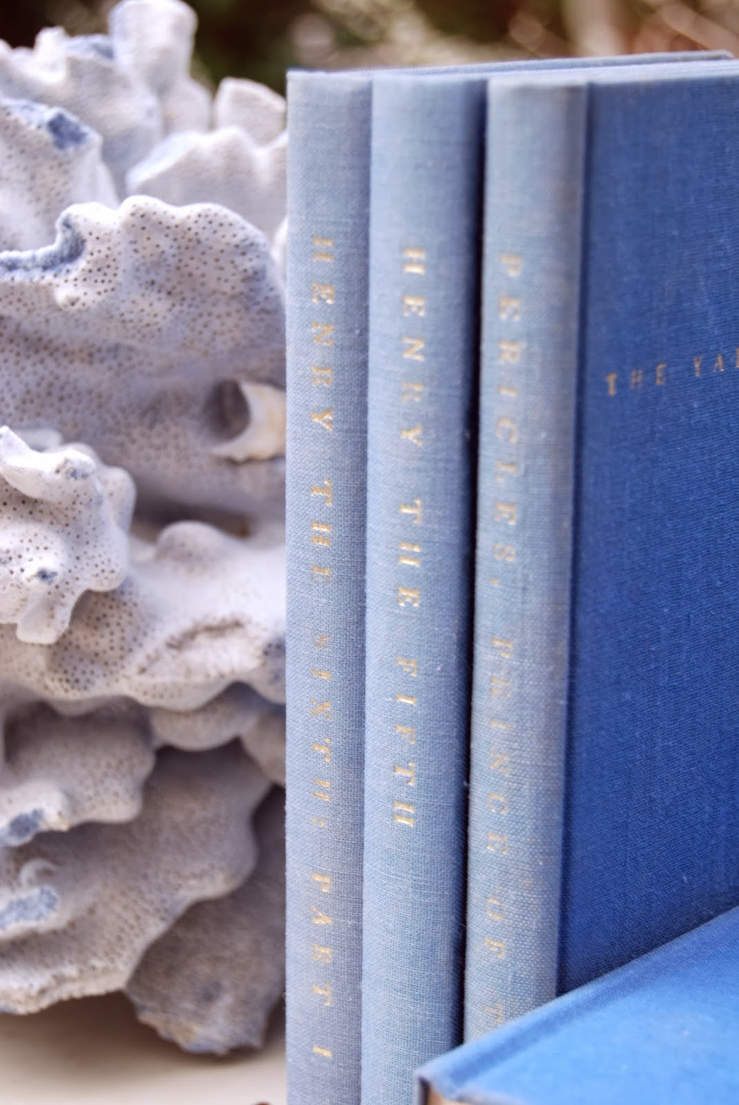 Blue Coral with blue books: Nature's Sculptures