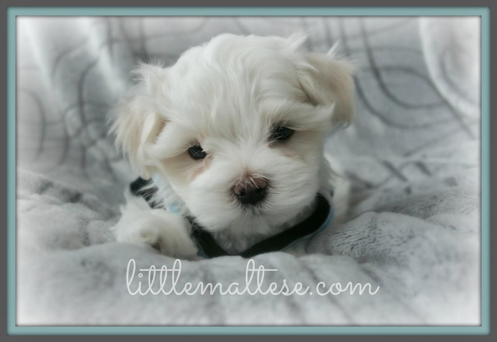 Meet Winston