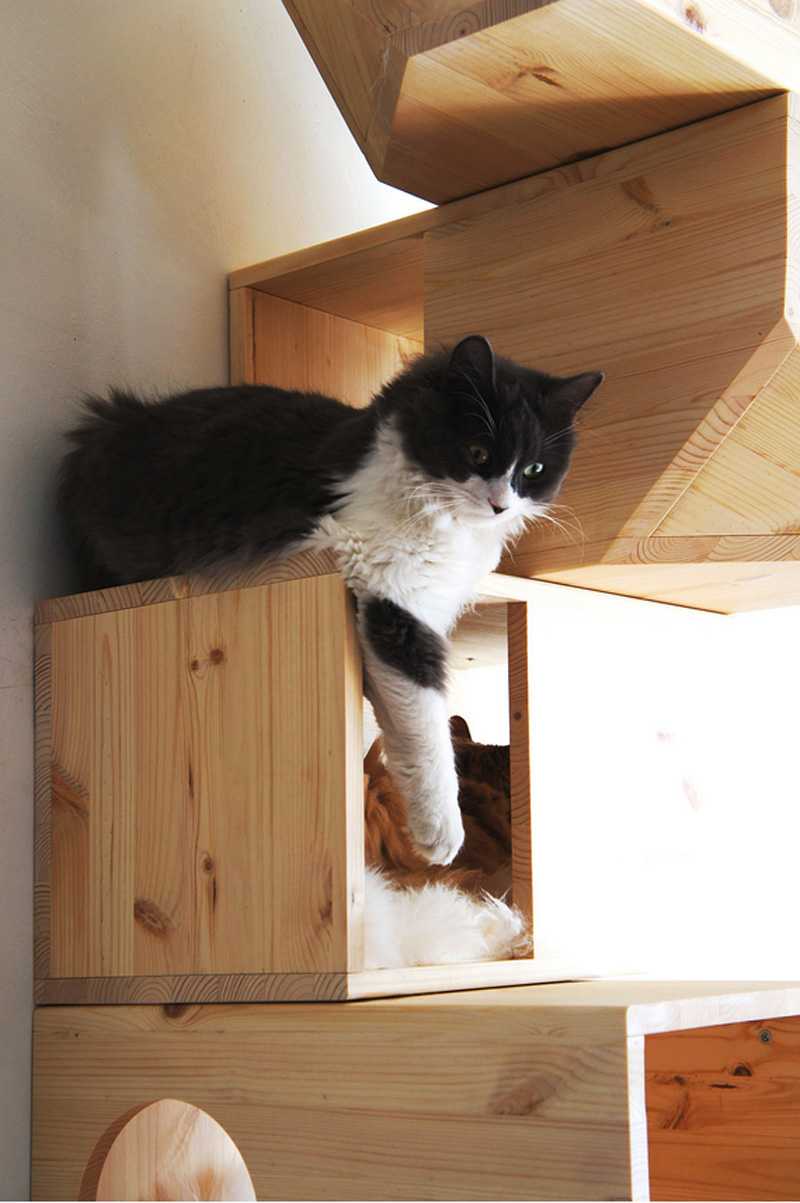 Catissa una casa modular para gatos maria victrix - Casas para gatos baratas ...