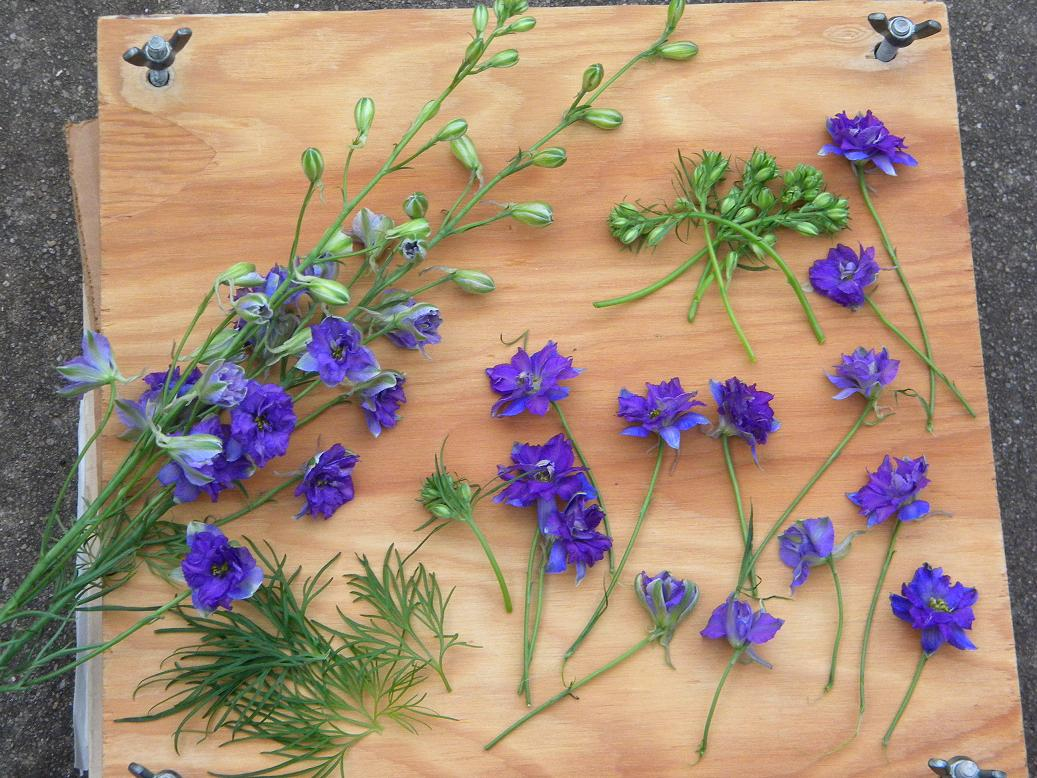 Wedding Flowers from Springwell DIY Wedding Flowers Pressed Flowers
