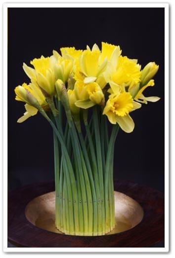 påskliljor, dekoration påskliljor, daffodils, flower decoration daffodils