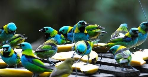 Resultado de imagem para imagens de passarinhos 7 cores
